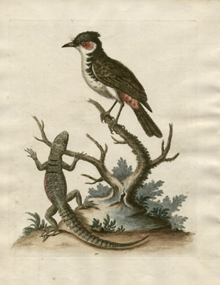 [Lizard and Bird, untitled], Plate 190