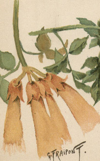 Gustave Fraipont Botanical Illustrations