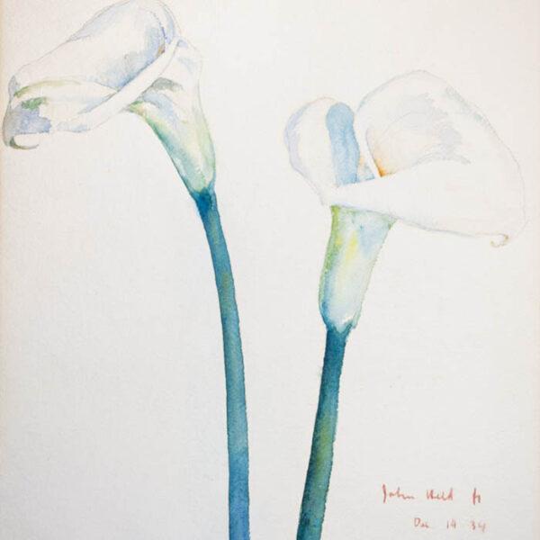 Calla Lilies, detail