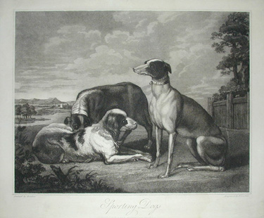Hondius, Sporting Dogs