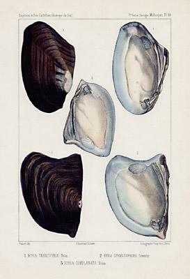 Flat Shells