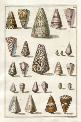 Index Testarum Conchyliorum