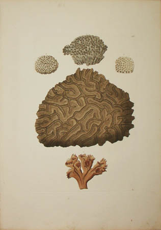 [Coral] Plate A.IV