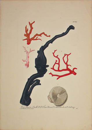 [Coral] Plate A.VIII