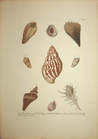 [Shells] Plate B.V