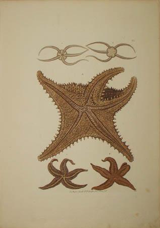 [Starfish] Plate G.1