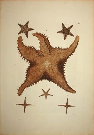 [Starfish] Plate G.2