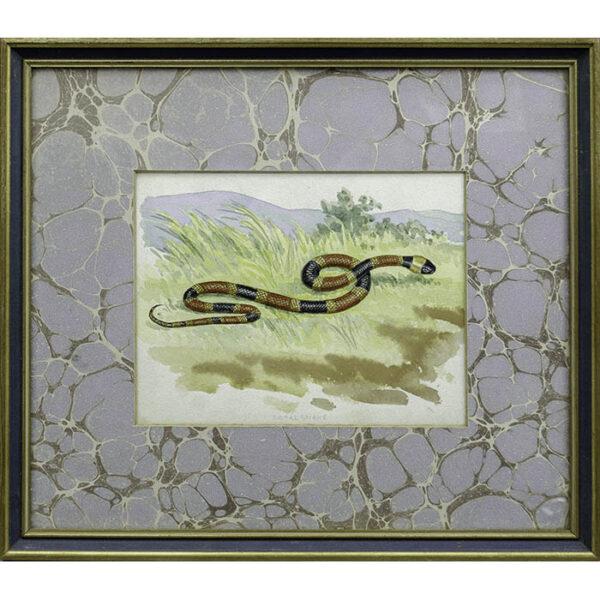 Charles Liedl, Coral Snake