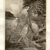 Budgerigar Parakeets in a River Landscape