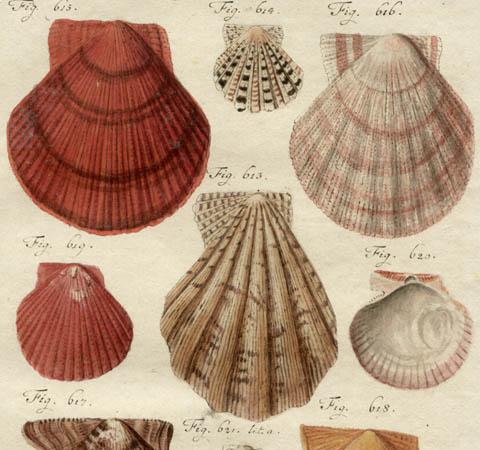 Natural History Studies of Seashells
