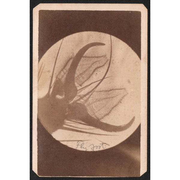 Carl Meinerth, Foot of Fly microscope photograph
