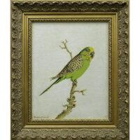 Wild Parakeet, Sarasota