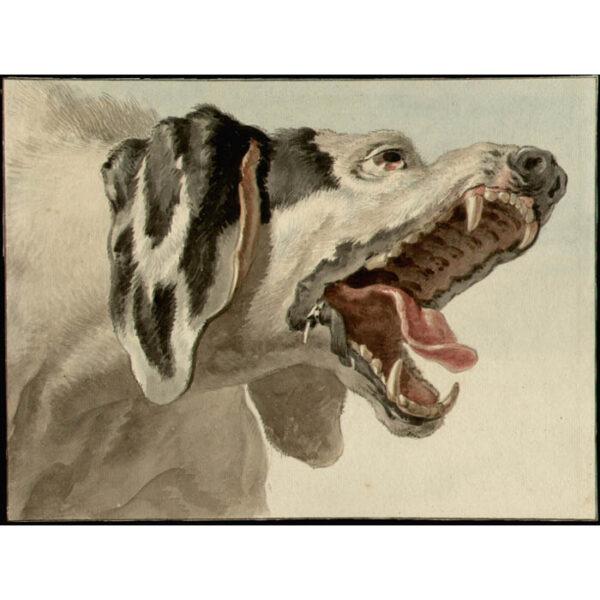 Study of Hunting Dog