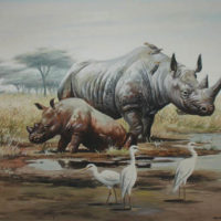Rhinoceroses and Egrets