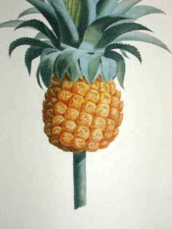 Study of a Pineapple