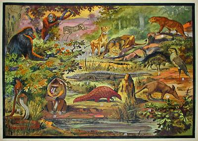 Ethiopisch Fauna II