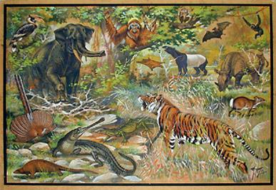 Orientalische Fauna