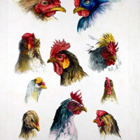 Rooster and Chicken Prints