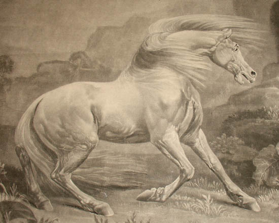 Sporting Art Horses George Stubbs The Horse And Lion Antique