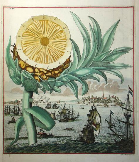 Pineapple: Natural History Study