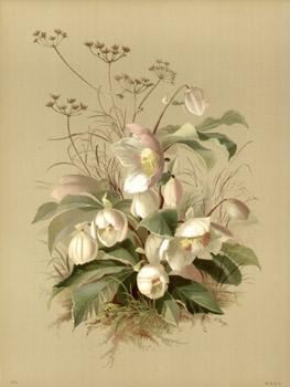 Emilie Vouga Botanicals