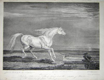 "Portraits of ""Celebrated Horses"""