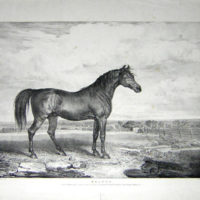 "Portraits of ""Celebrated Horses"""