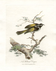 Birds of New South Wales