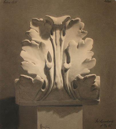 Acanthus (1885)