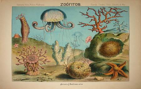 Zoófitos