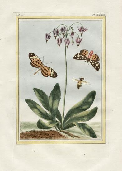 Plate 39, Volume 2
