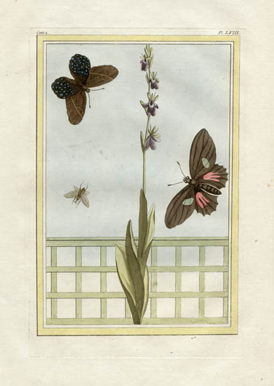 Plate 58, Volume 2
