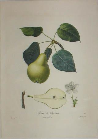 Plate 326, Poire de Provence
