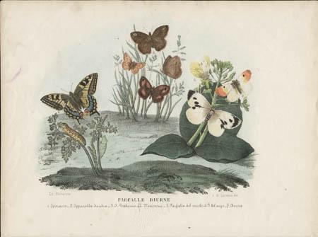 Farfalle Diurne [Macaone, etc.]