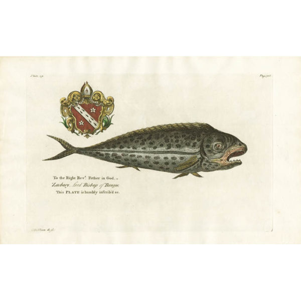 The Dolphin [Pompano Dolphinfish]. Plate 29.