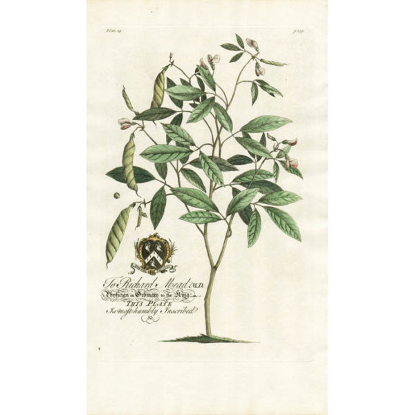 The Pigeon-Pea-Tree; Lat. Cytisus. Plate 19.