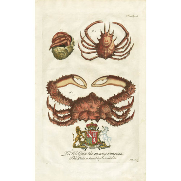 The Lazy Crab, Fig. 1; The Soldier-Crab, Fig. 2; The Horned Crab, Fig. 3, Plate 25