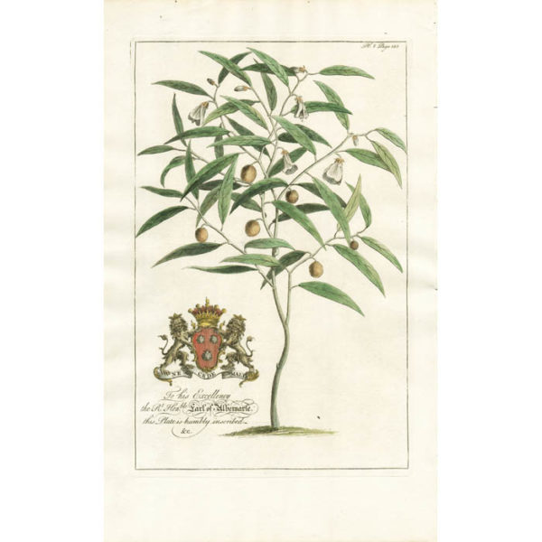 The French Willow. Plate 8.