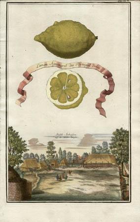 Limon Agostarot da Portugal Dolce