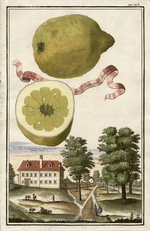 Limon da Portugal Dolce
