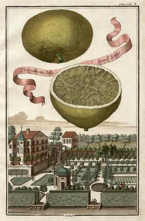 Bergamotto della Grand Sorte