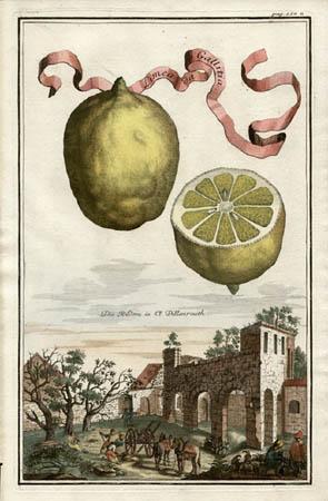 Limea da Gallitia
