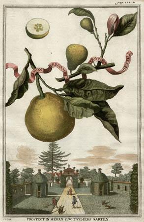 Limon Bergamotto Personzin Gientile