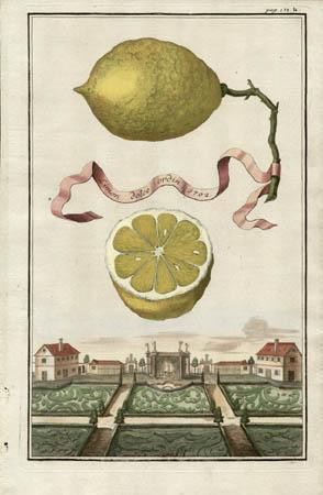 Limon Dolce Ordin, 1702