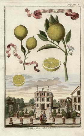 Ballotin di Spagna, Limon Guzza Appetito, 1701