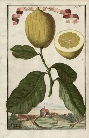 Limon Cedrato