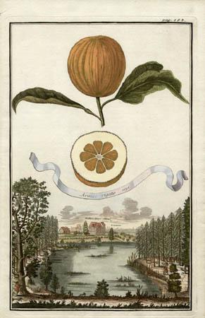 Aranzo Rigato, 1695