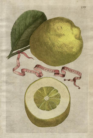 Plate 199, Limon Liguriae Ceriescus