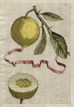 Plate 201, Limon Vulgo Pusilla Pila