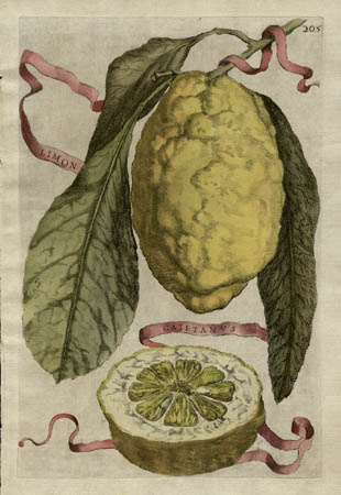 Plate 205, Limon Caietanus